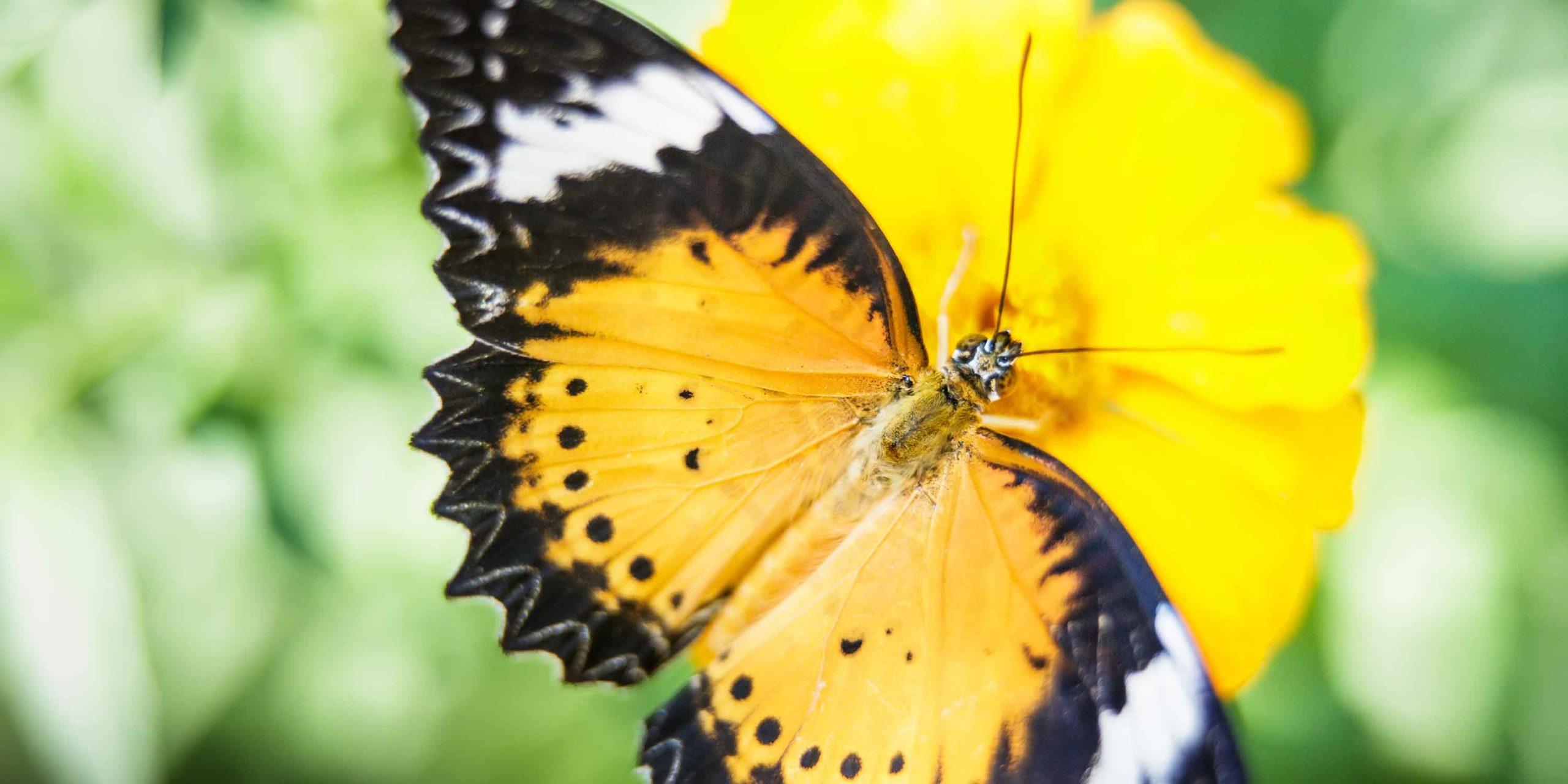 Banteai Srei Butterfly Centre